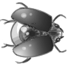 beetle%20eye%20100.jpg