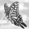 butterflying.jpg