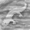 cavepondsalamander.jpg
