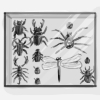 insectcollection.jpg