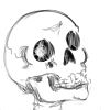 skeleton%20egg%20sac%20100%201.png